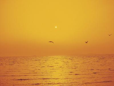 Golden Sunset with Seagulls Over an Ocean--Photographic Print