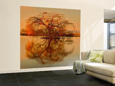 Golden Tree-Philippe Sainte-Laudy-Wall Mural – Large