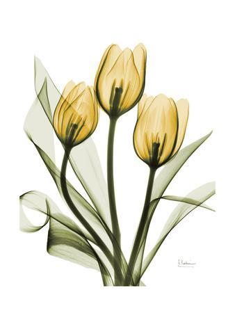 https://imgc.artprintimages.com/img/print/golden-tulips_u-l-pyjrxu0.jpg?p=0