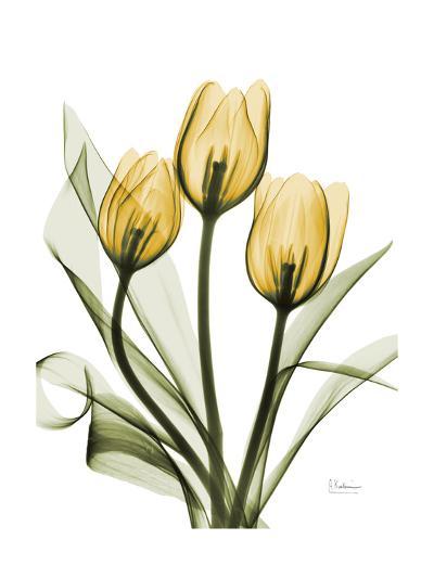 Golden Tulips-Albert Koetsier-Premium Giclee Print