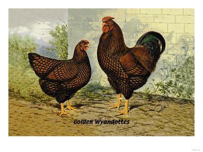Golden Wyandottes--Art Print