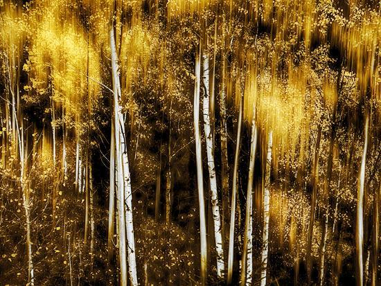 Golden-Ursula Abresch-Photographic Print