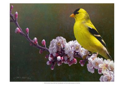 Goldfinch Flowers-Chris Vest-Art Print