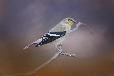 Goldfinch in the Light-Jai Johnson-Giclee Print