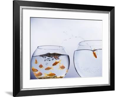 Goldfish Jumping into Different Bowl-Paul Hardy-Framed Photographic Print