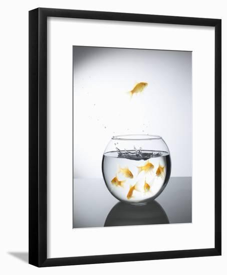 Goldfish jumping out of a bowl and escaping from the crowd-Steve Lupton-Framed Photographic Print