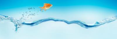 Goldfish Jumping Out of Water--Photographic Print