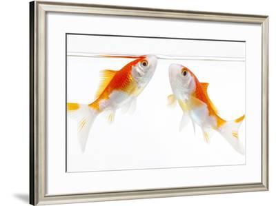 Goldfish Swimming in Water-Herbert Kehrer-Framed Photographic Print