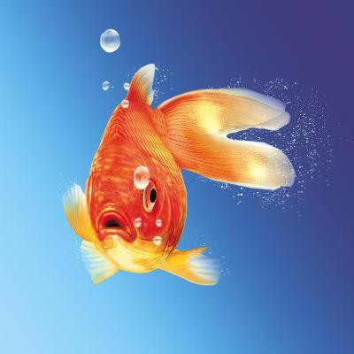 Goldfish with Water Bubbles--Art Print