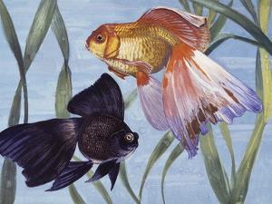 Goldfishes (Carassius Auratus), Cyprinidae