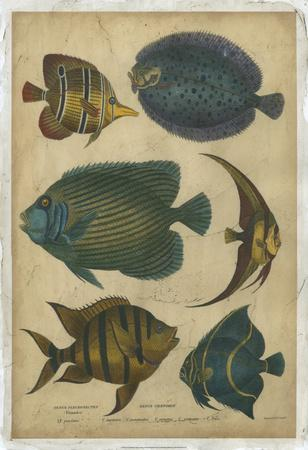 Goldsmith's Spinous Fishes