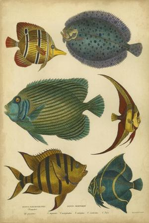 Non-Emb. Goldsmith's Spinous Fishes