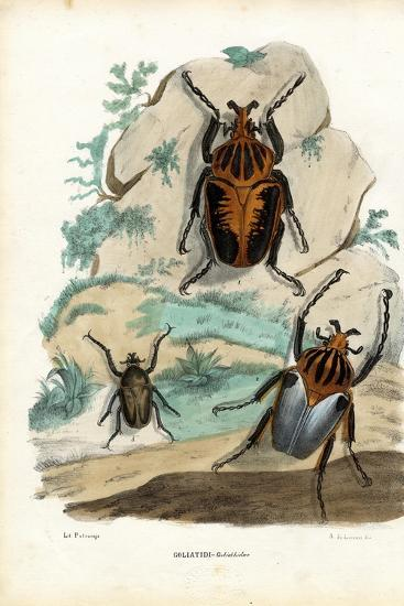 Goliath Beetles, 1863-79-Raimundo Petraroja-Giclee Print