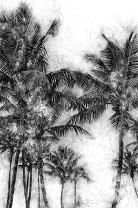 Dorado Palms 1 by Golie Miamee