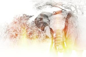 Golden Elephant by Golie Miamee