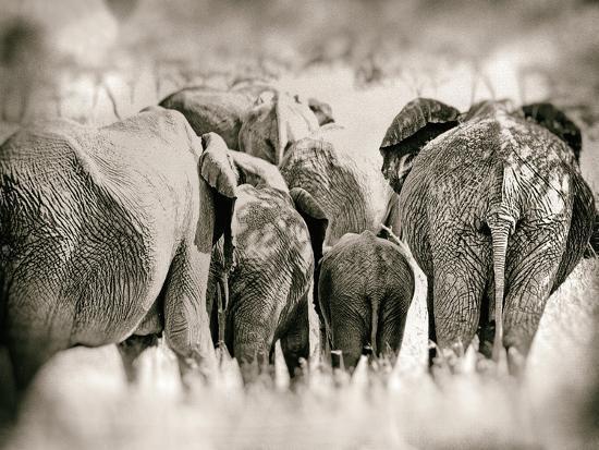 golie-miamee-vintage-elephant