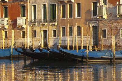 Gondolas Along the Grand Canal in Venice, Italy-David Noyes-Photographic Print