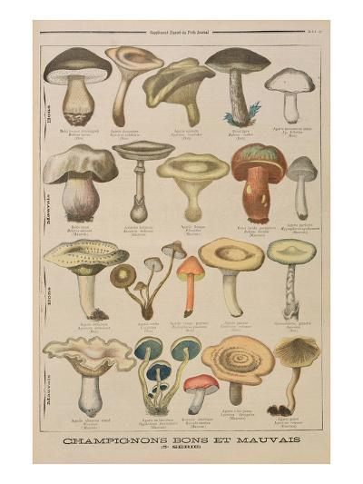 Good and Bad Mushrooms, Illustration from the Illustrated Supplement of Le Petit Journal-French-Giclee Print