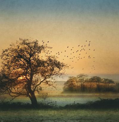 Good By Day Birds-William Vanscoy-Art Print