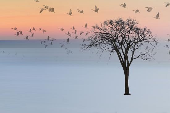 Good Day-Andre Villeneuve-Photographic Print