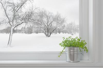 Winter Landscape Seen Through the Window, and Green Plant by GoodMood Photo