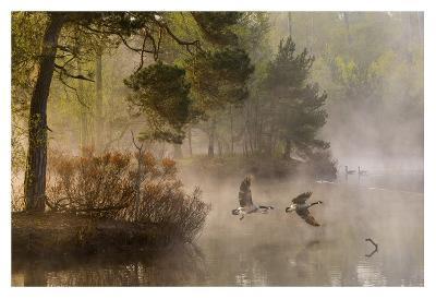 Goose Fight-Anton Van Dongen-Giclee Print