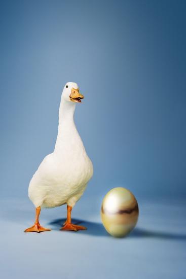 Goose Standing Beside Golden Egg, Studio Shot--Photo