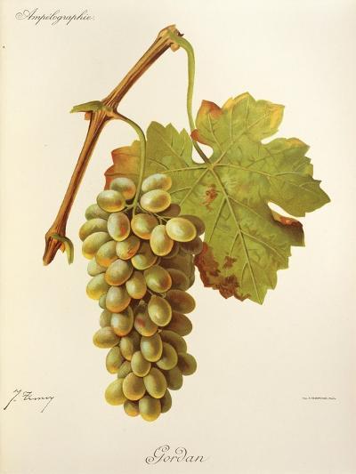 Gordan Grape-J. Troncy-Giclee Print