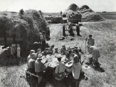 Farmers Having Lunch Brought and Served by Wives During Harvest of Spring Wheat in Wheat Farm