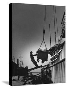 Fish Being Unloaded at Docks by Gordon Parks