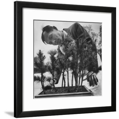 Japanese Horticulturist Kan Yashiroda Tending to a Bonsai Tree