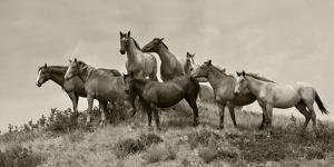 1421-Mustangs-2016-B&W by Gordon Semmens
