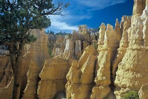 Bryce Canyon by Gordon Semmens