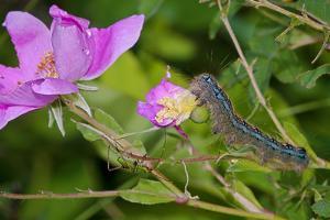 Caterpillar by Gordon Semmens