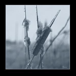 Ice Cattail 1 by Gordon Semmens