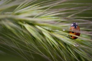 Lady Bug by Gordon Semmens