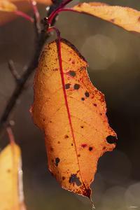 Leaf by Gordon Semmens