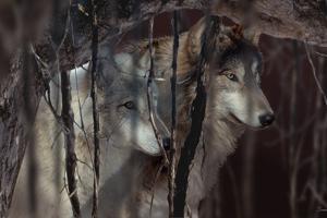 Shadowers by Gordon Semmens