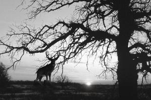 Silhouette by Gordon Semmens