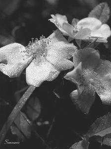 Wildflower 2 by Gordon Semmens