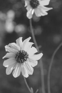 Wildflowers 11 by Gordon Semmens