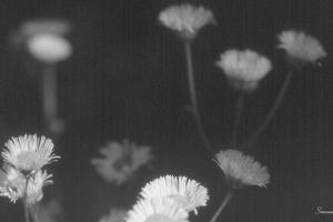 Wildflowers 4 by Gordon Semmens