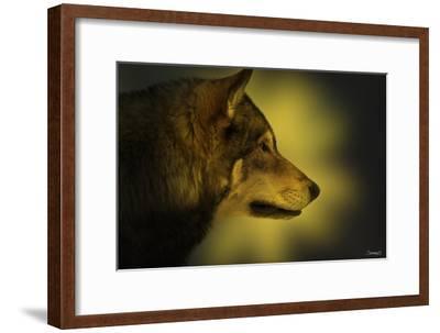 Wolf Profile HL1
