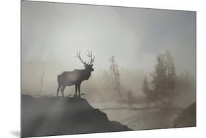 Yellowstone by Gordon Semmens