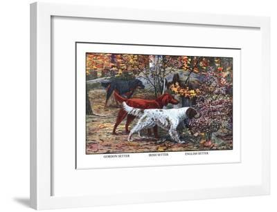 Gordon Setter, Irish Setter, English Setter-Louis Agassiz Fuertes-Framed Art Print
