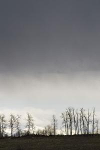 A Spring Storm Hovers over Cottonwood Trees in the Gallatin Valley, Near Bozeman, Montana by Gordon Wiltsie
