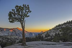 A Weather-Beaten Pine Grows Through Cracks in Glacier-Polished Granite at Olmstead Point by Gordon Wiltsie