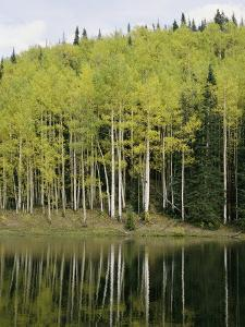 Autumn Colored Aspen Trees Cast Reflections in a Lake by Gordon Wiltsie