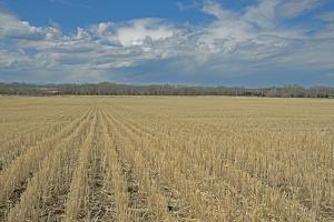 Clouds Billow over a Harvested Wheat Field Near Bozeman, Montana by Gordon Wiltsie