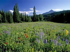 Meadow of Wildflowers Below Lone Mountain by Gordon Wiltsie